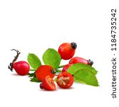 beautiful fragrant rosehip.... | Shutterstock .eps vector #1184735242