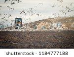 Lot Of Many Sea Gulls  In City...