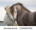 A Pair Of Horses Kissing With...
