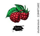 raspberry vector drawing....   Shutterstock .eps vector #1184871682