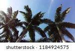 coconut tree in the blue sky in ... | Shutterstock . vector #1184924575