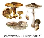 Edible Oyster Mushrooms Set...