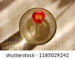 Flower Of Clivia Or Kafir Lily...