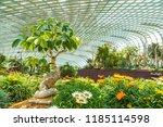 singapore   june 23  2018 ... | Shutterstock . vector #1185114598