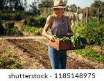 female farmer working in field. ... | Shutterstock . vector #1185148975
