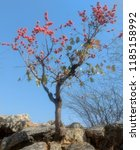 simplicity redefined  palash ... | Shutterstock . vector #1185158992