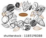 isolated vector set of nuts on... | Shutterstock .eps vector #1185198388