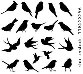 Vector Collection Of Bird...