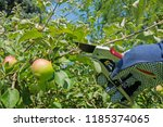 Intersect Fruit Tree