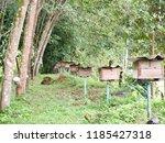 garden in southen thailand   Shutterstock . vector #1185427318