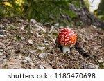 amanita muscaria   inedible... | Shutterstock . vector #1185470698