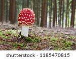 amanita muscaria   inedible...   Shutterstock . vector #1185470815