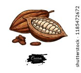 cocoa vector superfood drawing... | Shutterstock .eps vector #1185472672