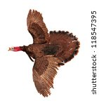 A Turkey In Flying Motion...