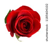 Stock photo a red rose gift 1185604102