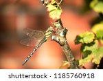 blue green mosaic maiden sits... | Shutterstock . vector #1185760918