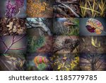 autumn elements  foliage and... | Shutterstock . vector #1185779785