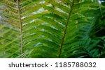 kleingarten schrebergarten in... | Shutterstock . vector #1185788032