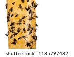 flies glued on sticky flypaper... | Shutterstock . vector #1185797482