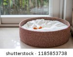 Stock photo an empty dog bed basket with only dog bone snack left on the bed with copy space concept for 1185853738