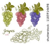 grapes collection in hand drawn ... | Shutterstock .eps vector #1185914698