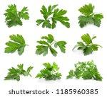 set of fresh green parsley... | Shutterstock . vector #1185960385