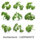 set of fresh green parsley... | Shutterstock . vector #1185960472
