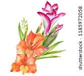 watercolor realistic gladiolus.... | Shutterstock . vector #1185972058