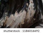 wood with sunlight | Shutterstock . vector #1186016692