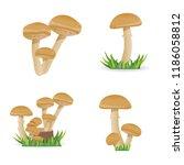 set illustration edible... | Shutterstock .eps vector #1186058812