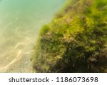 seabed  underwater photography | Shutterstock . vector #1186073698