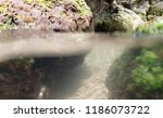 seabed  underwater photography | Shutterstock . vector #1186073722