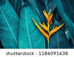 tropical exotic flower blooming ... | Shutterstock . vector #1186091638