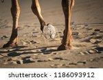 camel's hoof in sand | Shutterstock . vector #1186093912
