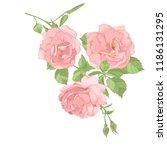 roses. wedding concept. floral... | Shutterstock .eps vector #1186131295