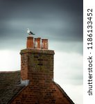 a seagull perched on a chimney... | Shutterstock . vector #1186133452