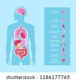 human man people anatomy... | Shutterstock .eps vector #1186177765