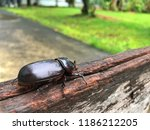 a scarab beetle with black... | Shutterstock . vector #1186212205