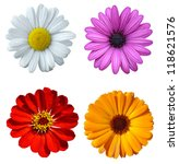 collage flower | Shutterstock . vector #118621576