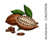 cocoa vector superfood drawing... | Shutterstock .eps vector #1186254028
