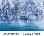 Xinjiang Yili Swan Spring...