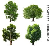trees with green leaves... | Shutterstock . vector #118629718