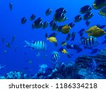 Many Tropical Fish Butterflies...