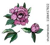 vintage flowers set on white... | Shutterstock .eps vector #1186417822