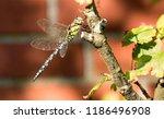 blue green mosaic maiden sits... | Shutterstock . vector #1186496908