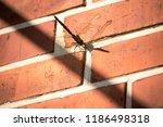 blue green mosaic maiden sits... | Shutterstock . vector #1186498318