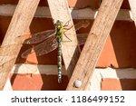 blue green mosaic maiden sits... | Shutterstock . vector #1186499152