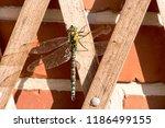 blue green mosaic maiden sits... | Shutterstock . vector #1186499155