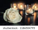 white rose and blurred burning... | Shutterstock . vector #1186504795