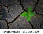 green plant growing trough dead ...   Shutterstock . vector #1186553125